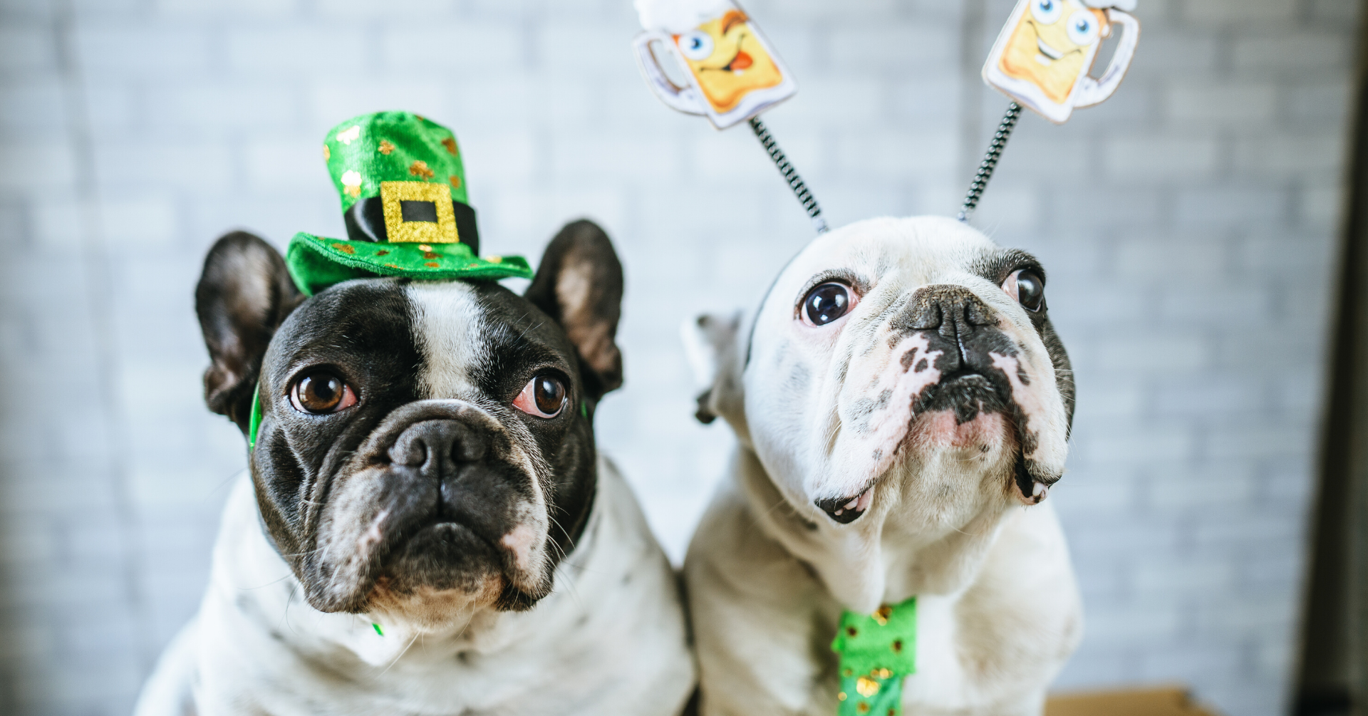 On March 15th Bring Your Dog To The Bar: St. Puppy's Day At O'Brien's Irish Pub